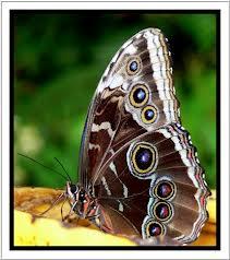 eyes butterfly