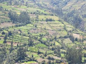 patchwork hills