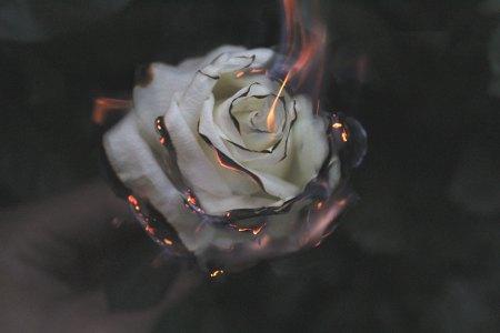 jepthah rose