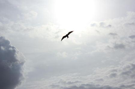 bird soar